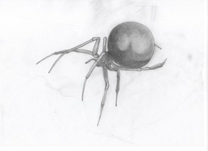 widow_spider